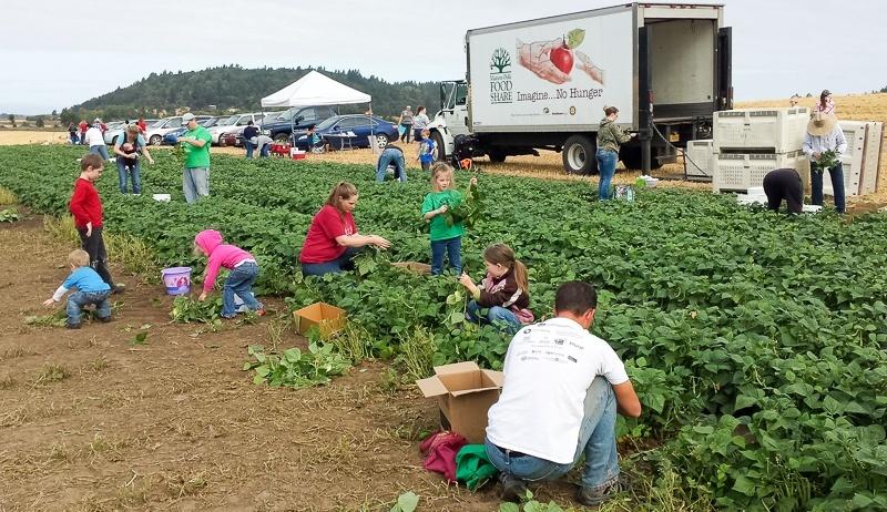 Salem Harvest 3-1